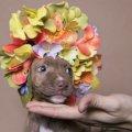 Pit Bull Flower Power: Ipostazele gingase ale cainilor de temut