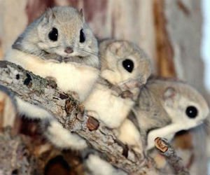 Cele mai simpatice animale, in 15 poze adorabile