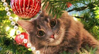 15+ Brazi de Craciun, decorati cu pisici