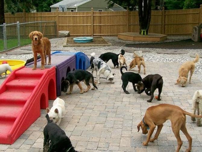 Площадка для собаки своими руками