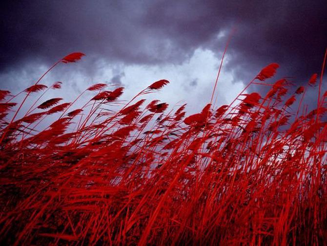 Fotografii-National-Geographic-rosu07.jpg