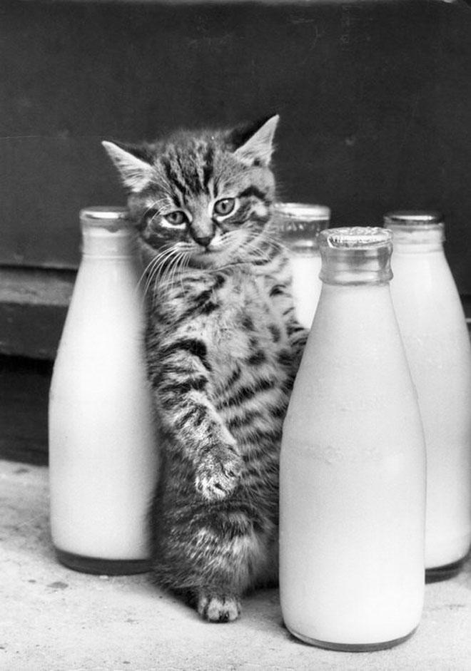 Almazikn Рейтинг. Позитивные эмоции. Черно-белые котята (22 фото…