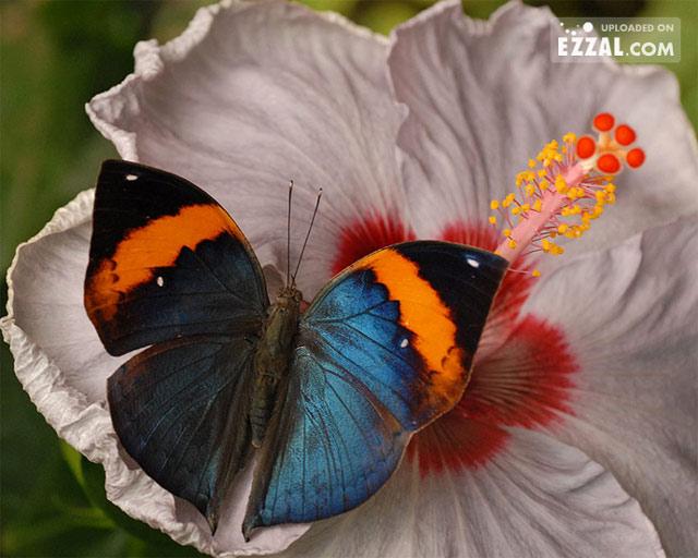 Poza 1 - 20 de poze cu...fluturi!