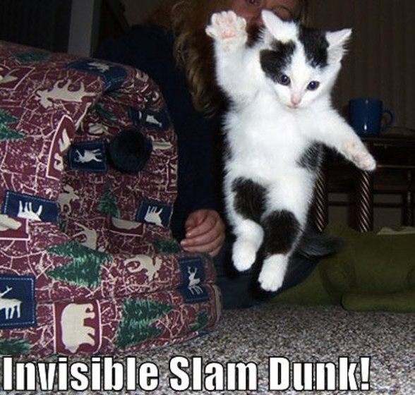 http://cdn.toxel.ro/img/contents/funny-pictures-kitten-does-an-invisible-slam-dunk-588x560.jpg