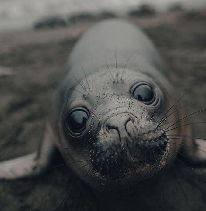 Cele mai simpatice animalute de la Polul Nord, in poze adorabile - Poza 17