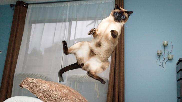 Pisicile chiar au simtul umorului. Avem dovada! - Poza 24