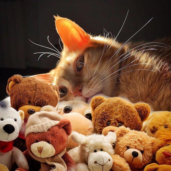 Viata de pisica, in poze adorabile - Poza 8