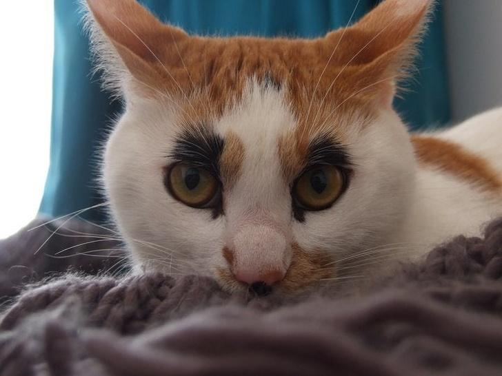 13 exemple de pisici cu infatisare atipica - Poza 11