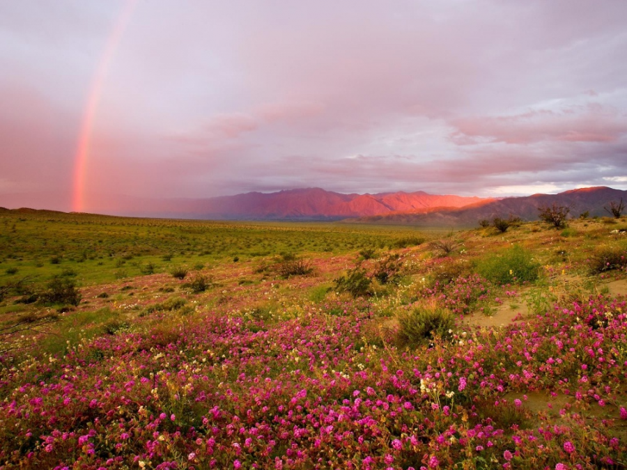 Natura in ipostaze spectaculoase - Poza 17