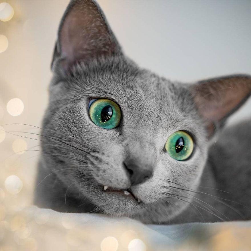 Pisicutele cu cei mai frumosi ochi din lume, in poze superbe - Poza 7