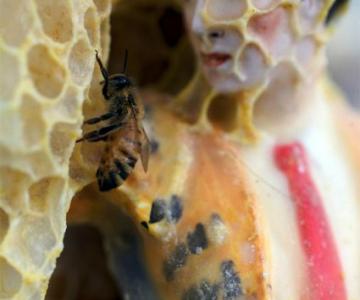 Sculpturi din portelan remodelate de albine