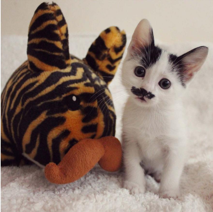 Cele mai frumoase poze cu pisici - Poza 13