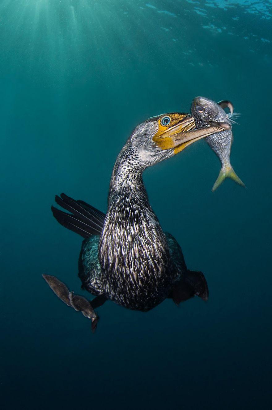 Fotografii superbe din uimitoarea lume subacvatica - Poza 19