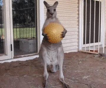 Cele mai haioase gif-uri animate cu animale