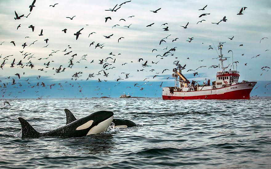 Balenele din Oceanul Inghetat, in poze superbe - Poza 6