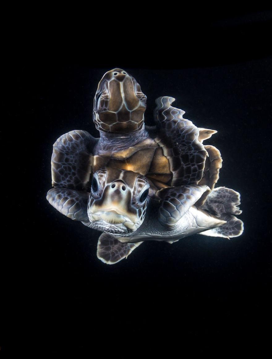 Fotografii superbe din uimitoarea lume subacvatica - Poza 18