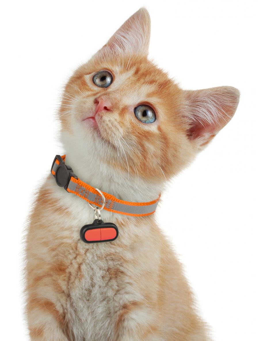 Cadouri inedite pentru posesorii de animale - Poza 15