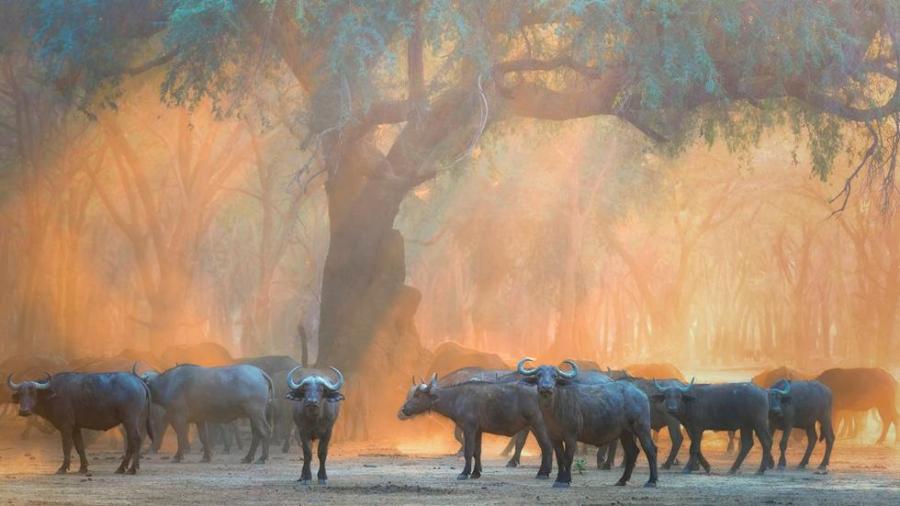 Uimitoarea natura, surprinsa in fotografii spectaculoase - Poza 2