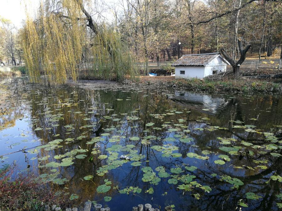 Parcul Nicolae Romanescu: Minunea verde din Banie, in poze superbe - Poza 1