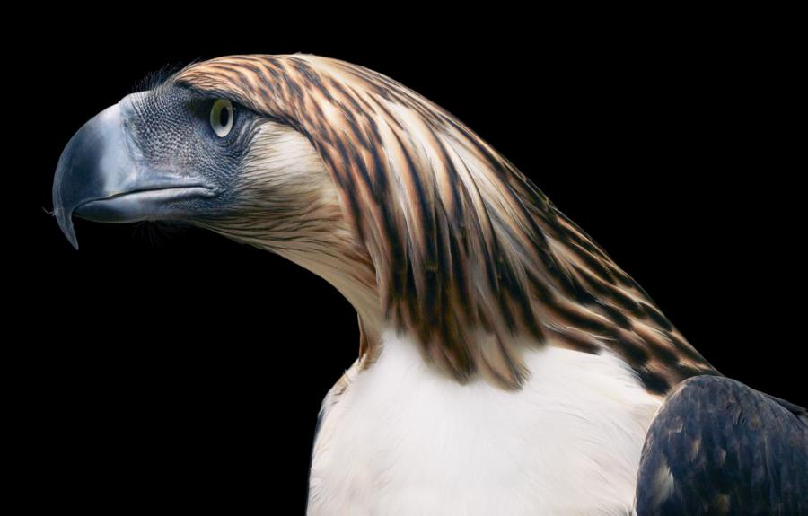 Frumusetea pasarilor rare, in poze fascinante - Poza 3