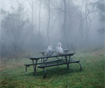 Fiinte umane, nu animale, de Simen Johan