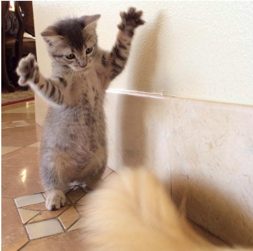 Cele mai frumoase poze cu pisici - Poza 12