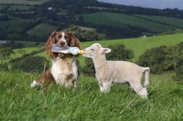 Cele mai prietenoase animale, in imagini induiosatoare - Poza 15