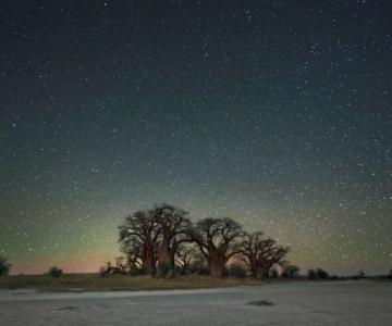 Nopti de diamant: Cei mai frumosi arbori seculari, in padurile stelare