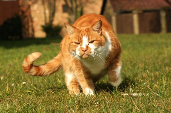 Ce-ti transmite pisica prin pozitia cozii - Poza 4