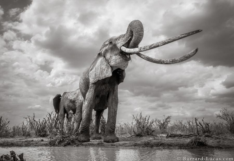 """Povestea ultimelor fotografii cu """"Regina elefantilor"""" - Poza 7"""