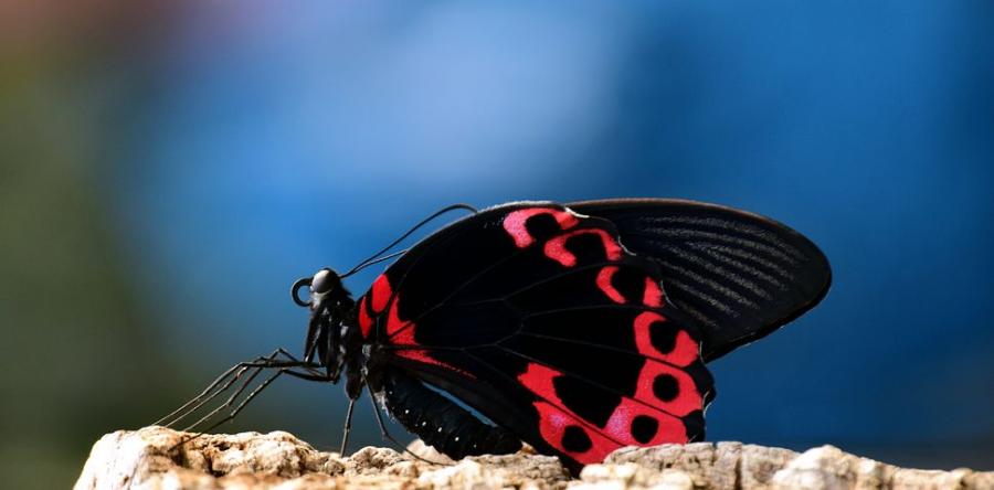 Cei mai frumosi fluturi din lume, in poze spectaculoase - Poza 13