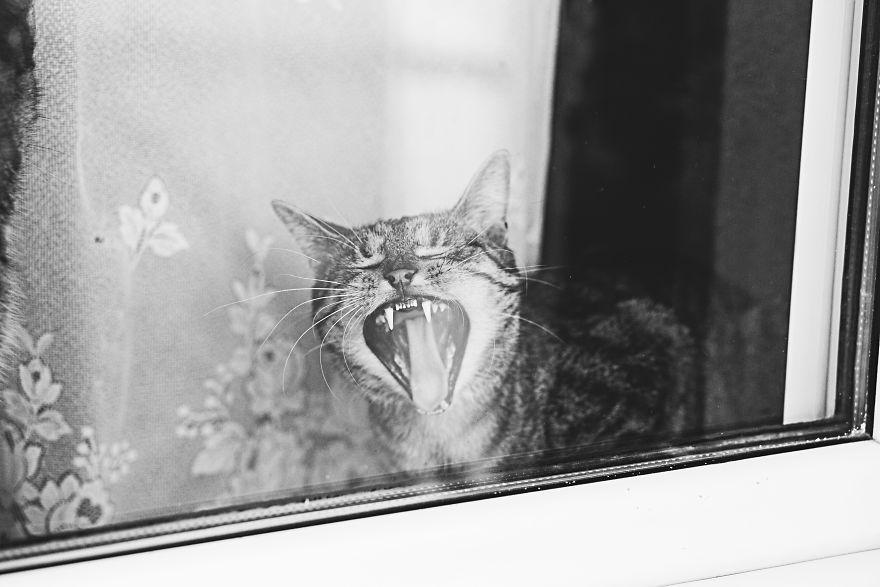 Pisici la fereastra, in poze alb-negru - Poza 1