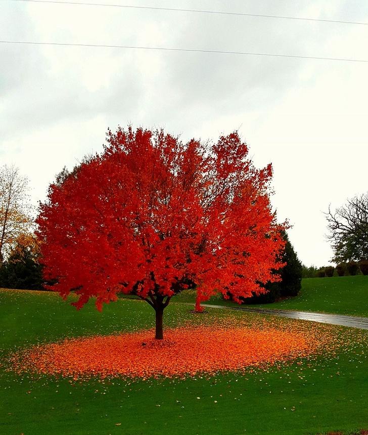 Bucuria culorilor de toamna, in toate colturile lumii - Poza 2