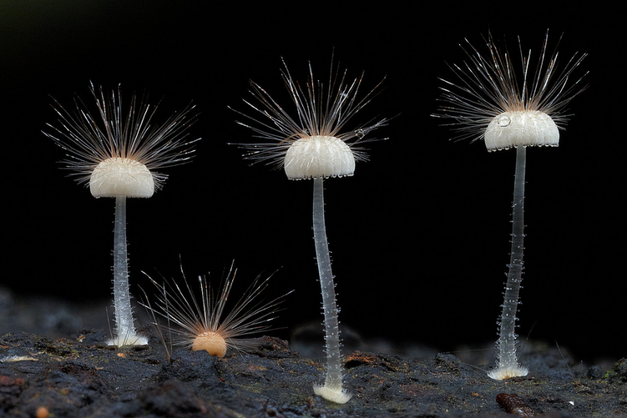 10+ Ciuperci fantastice, in poze ireal de frumoase - Poza 7