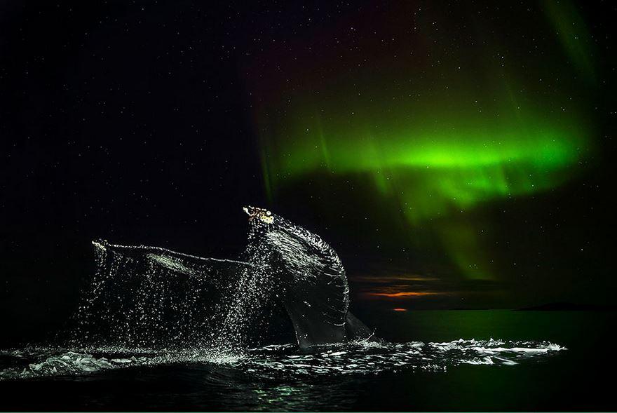 Balenele din Oceanul Inghetat, in poze superbe - Poza 2