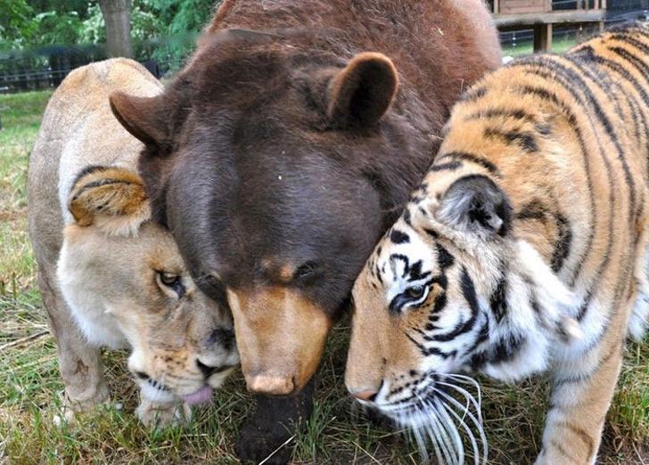 Cele mai prietenoase animale, in imagini induiosatoare - Poza 6