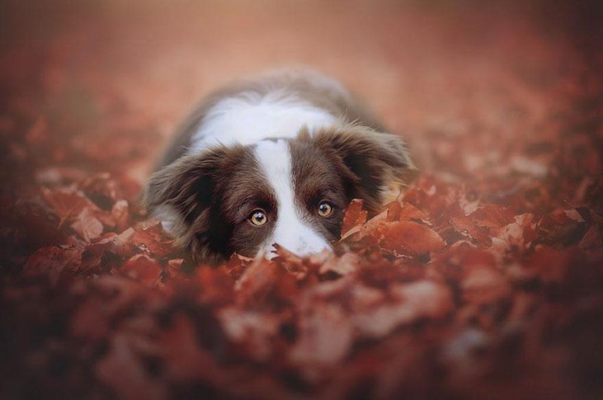 Portrete autumnale de suflet, de Anne Geier - Poza 13
