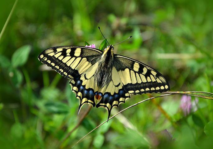 Cei mai frumosi fluturi din lume, in poze spectaculoase - Poza 7