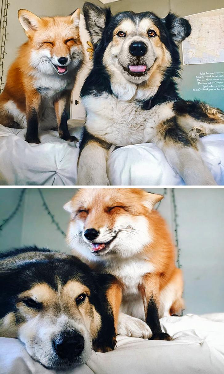 Cele mai prietenoase animale, in imagini induiosatoare - Poza 11