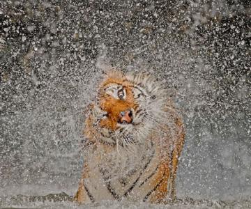 Cele mai bune fotografii National Geographic 2012