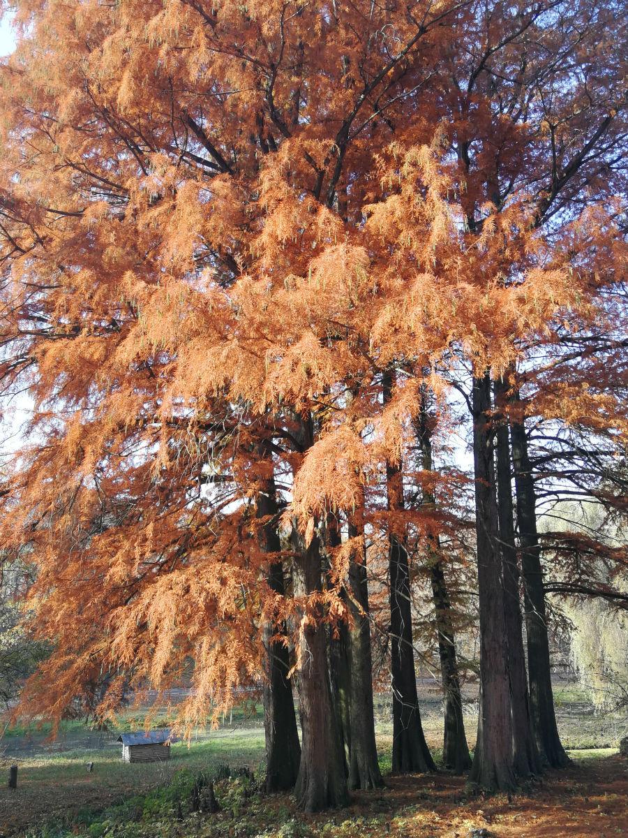 Parcul Nicolae Romanescu: Minunea verde din Banie, in poze superbe - Poza 7