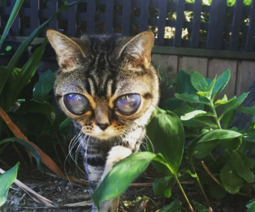 Felina cu ochi de extraterestru
