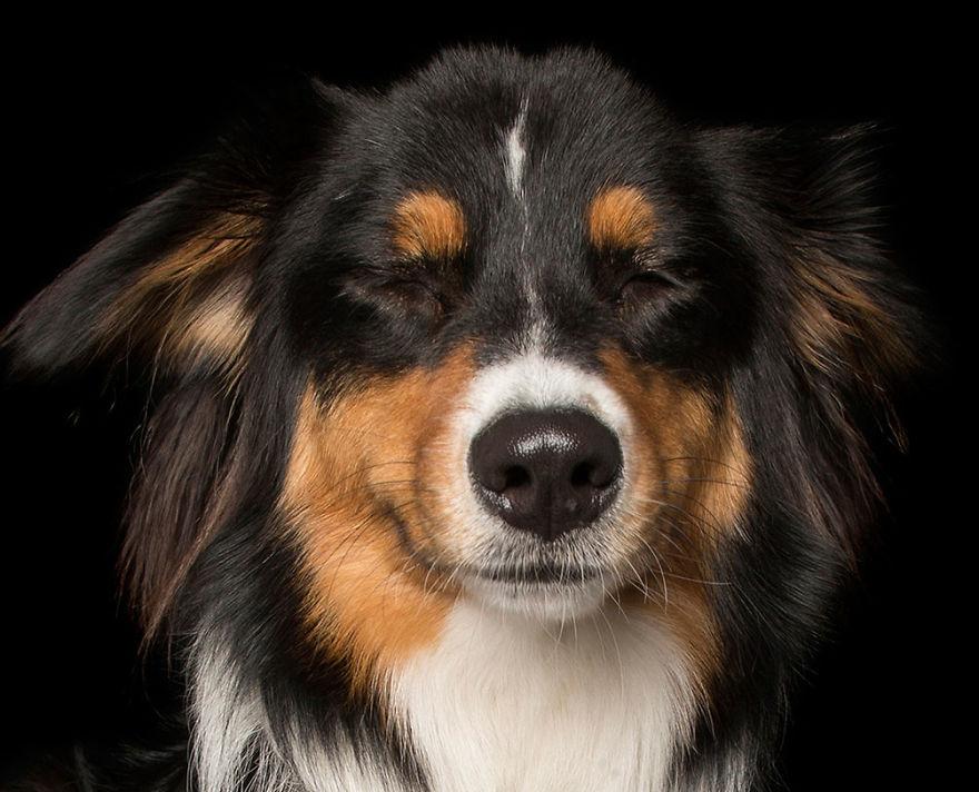 Cainii zen: Rasa canina, intre beatitudine si extaz - Poza 10