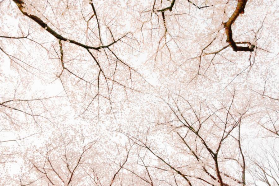Peisaje primavara superbe care iti vor umple sufletul cu bucurie - Poza 17