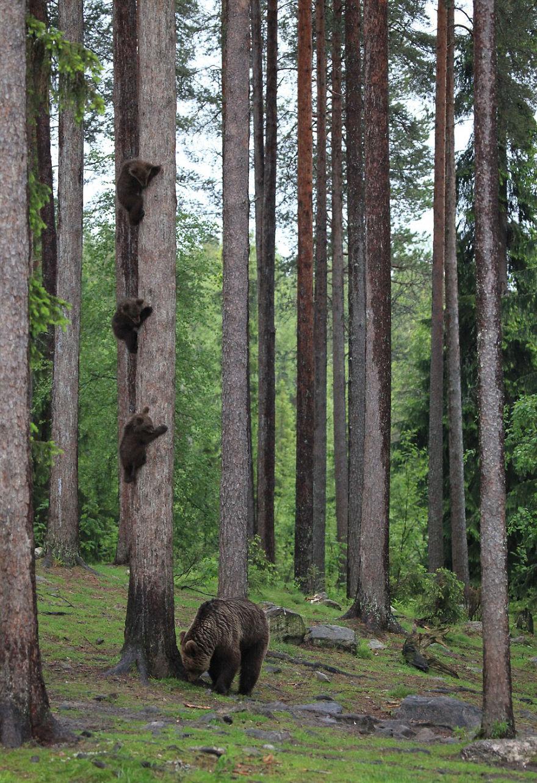 Comedy Wildlife Photography: Cele mai amuzante poze din salbaticie - Poza 6