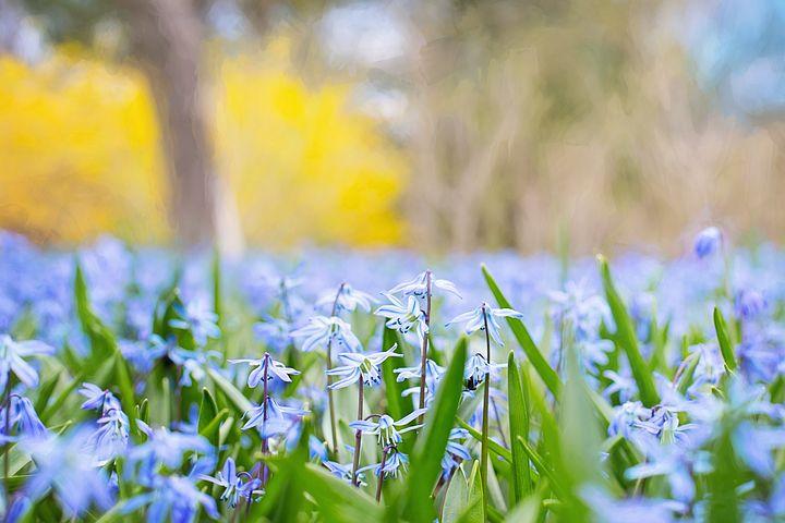 Gingasia florilor de primavara in poze superbe - Poza 17