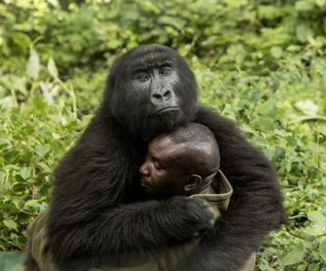 BigPicture Photo Contest: Fotografii spectaculoase din natura