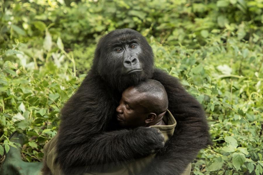 BigPicture Photo Contest: Fotografii spectaculoase din natura - Poza 1