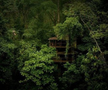 Finca Bellavista, satul din copaci