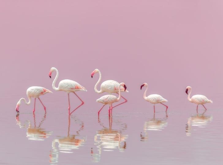 National Geographic: Cele mai bune poze ale anului 2018 - Poza 5